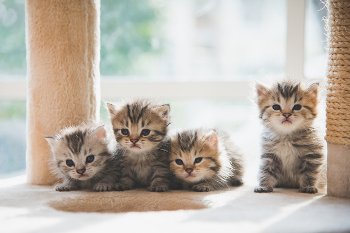 Grey kittens sat on a fluffy bed.