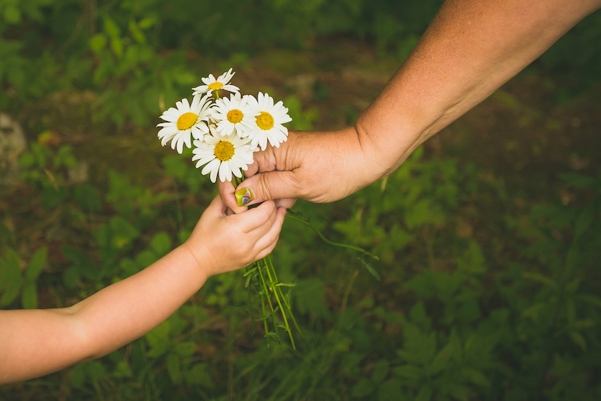 Act of kindness: Child giving daisies to adult